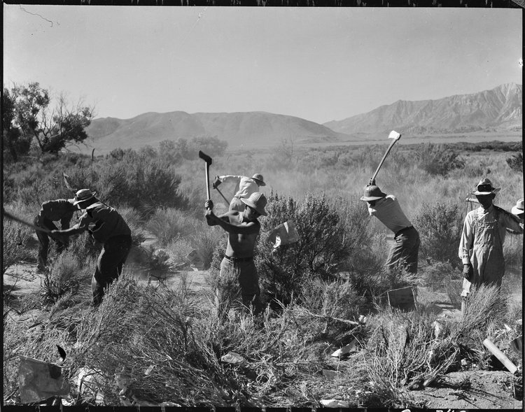 Manzanar Relocation Center, Manzanar, California. More land is being cleared of sage brush at the southern end of the project to enlarge this War Relocation Authority center for evacuees of Japanese ancestry.