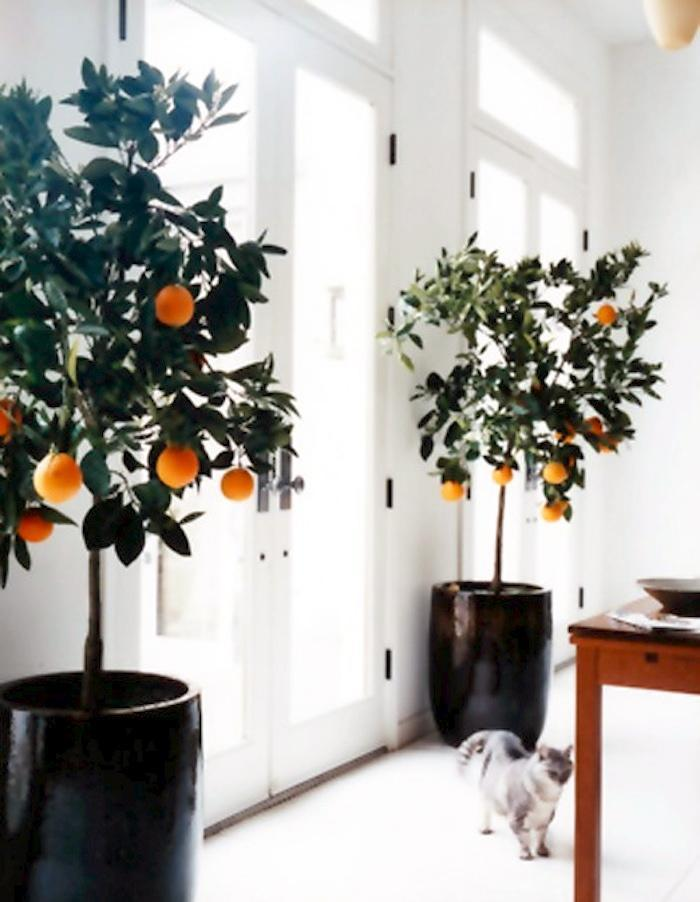 6 sweet delicious fruits you can grow indoors all year long - Cool looking house plants ...