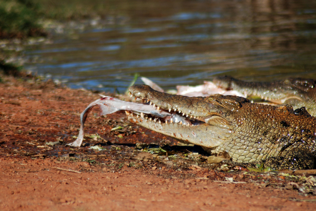 'Human stupidity' cited as reason for fatal crocodile attack in Australia
