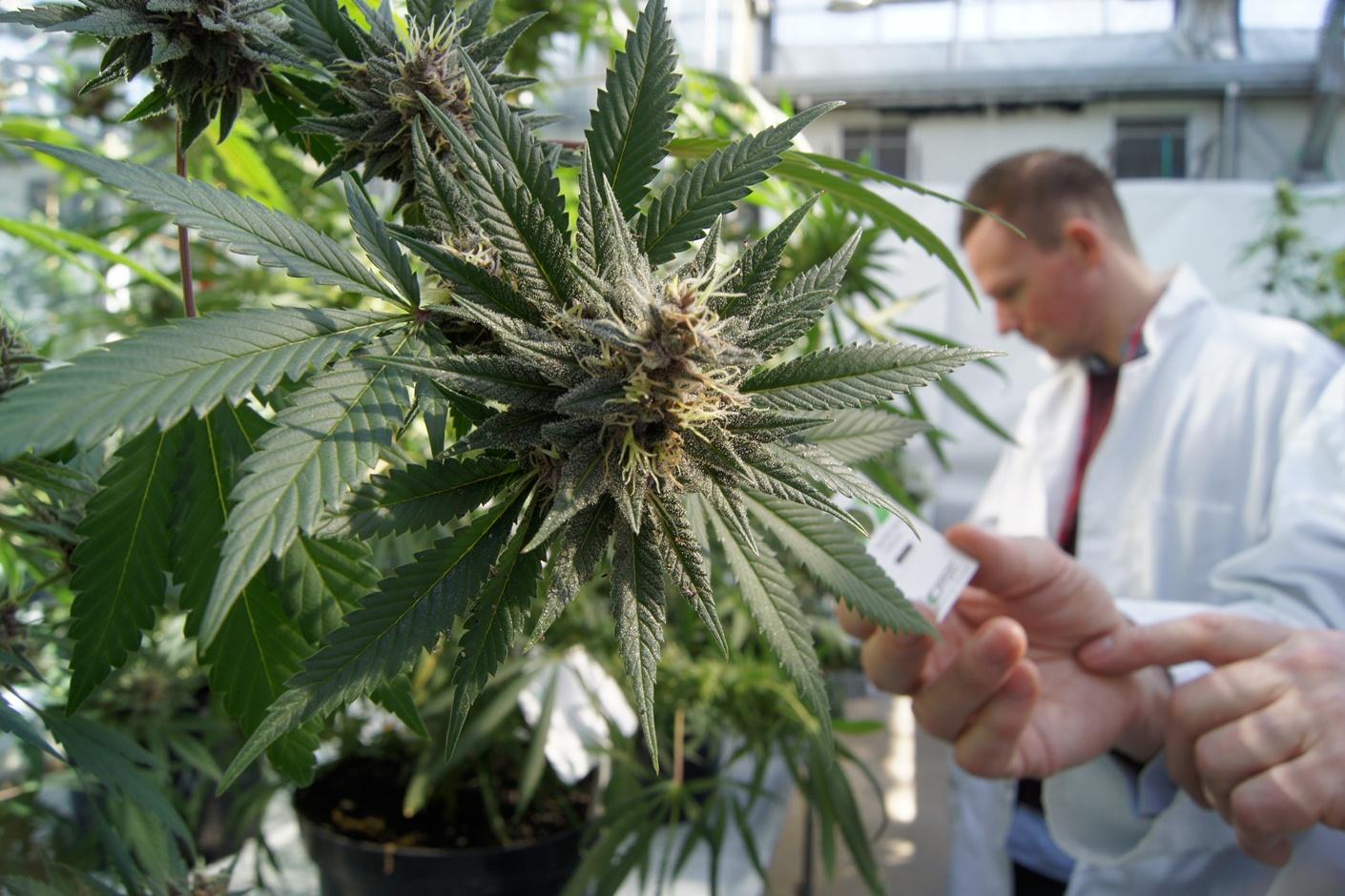 cannabis lab potency test2 - Cannabidiol (CBD)