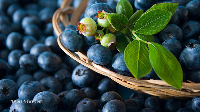 How to grow blueberries in pots this summer