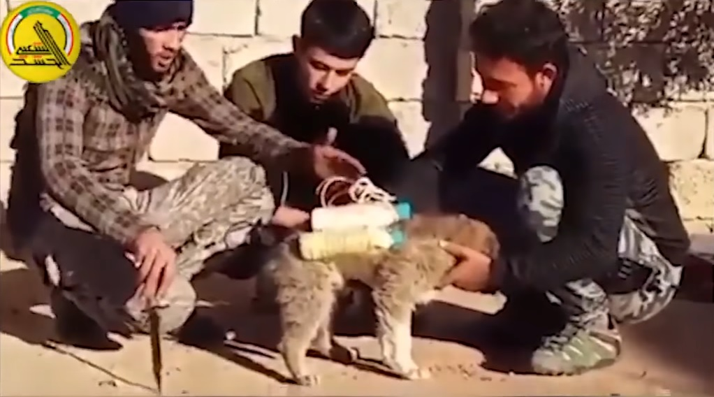 Image: ISIS now strapping bombs to puppies