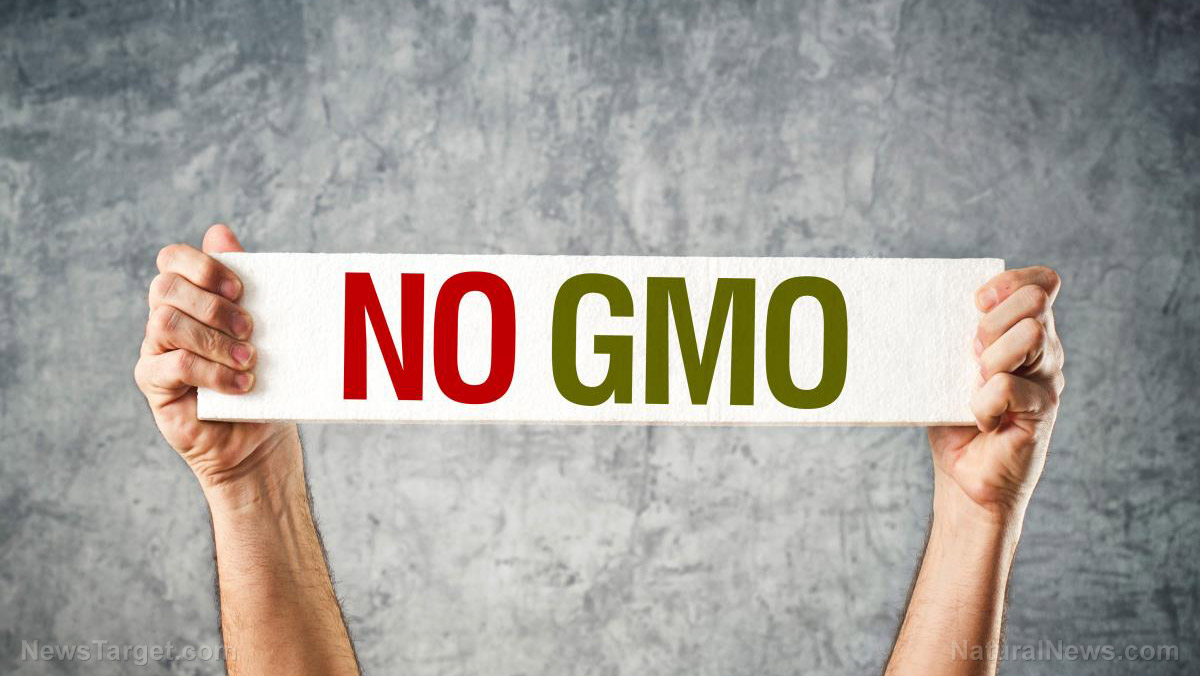 GMOs are killing us: Facts you probably don't know