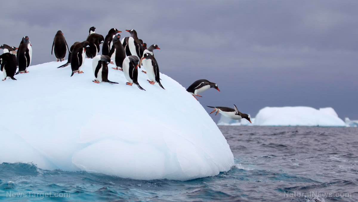 After dropping polar bears because their populations are actually booming, loony leftists now claim penguins are gay and being killed by the climate