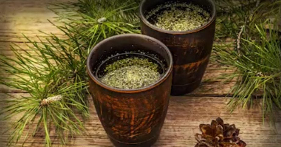 Is pine needle tea the answer to vaccine shedding / transmission? Pine-needle-tea-covid-vaccines-suramin-shikimic-acid